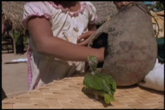 Following-shot of a little girl removing baby parrots from a   nest to enjoy the Stock Footage