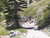 A mountain biker rides down a trail. Stock Footage