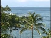 Waves roll beneath Hawaiian palm trees. Stock Footage