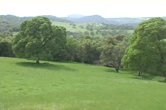 Trees stand on Green rolling hills and fields in Napa California. Stock Footage