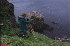 A cinematographer films birds. - stock footage