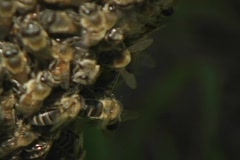 Bees swarm a beehive. Stock Footage