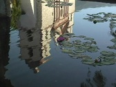 A lily pad pond reflects a Catholic mission in Santa Barbara, California. Stock Footage