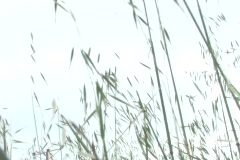 Blades of grass blow in the breeze as a plane passes by. Stock Footage