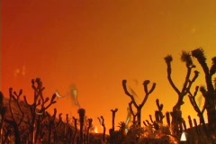 Flames rise from large cactus in the desert. Stock Footage