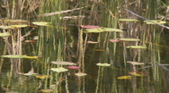 Water reflections Stock Footage