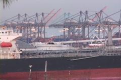 Medium shot of cargo ships at Long Beach, California harbor. Stock Footage