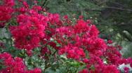 Mayfly flower  Stock Footage