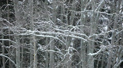 Snowfall in a forest in Sweden Stock Footage