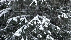 Snow falling on the branches of a fir tree - stock footage