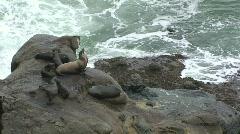 Harbor Seals on Pacific Ocean Coastline – Medium Shot Stock Footage