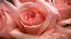 Rotating roses Stock Footage