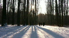 People seniors walking in winter wood Stock Footage