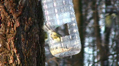 Tomtit on tree near feeding trough Stock Footage