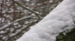 Stem tree coated by white snow panning Stock Footage