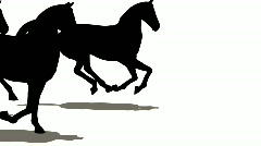 Many horses silhouette - stock footage