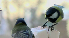 Fights of birdies 2 Stock Footage