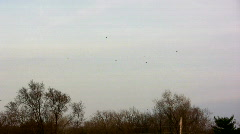 Hawks Circling Forest Sky Stock Footage
