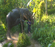 Elephant Washdown Stock Footage
