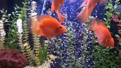 tropical fish,aquarium - stock footage
