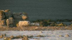 Eroded limestone stacks on the coast on the island Fårö in Sweden Stock Footage