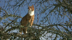 Cat in a tree Stock Footage