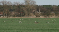 Stock Video Footage of common crane