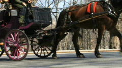 Central park horse carriage Stock Footage