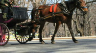 Stock Video Footage of central park horse carriage
