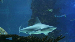 Sharks Swimming 02 - stock footage