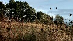 Dried Flowers in Wind Stock Footage