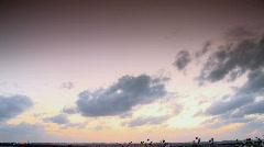 Cotton field tilt after sunset Stock Footage