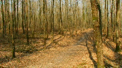 Forest moving shadows time lapse - stock footage