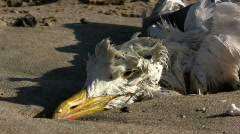 Dead seagull on the sand Stock Footage