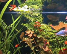 Plants and fishes in one aquarium Stock Footage