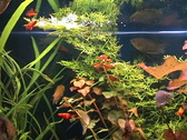 Stock Video Footage of Plants and fishes in one aquarium