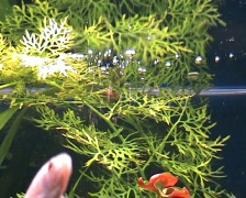Aquarium life - stock footage