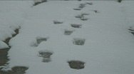 Footsteps snow Stock Footage