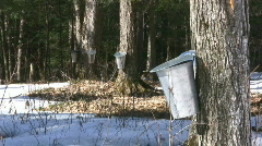 Maple Syrup Farm Stock Footage