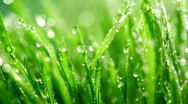 Stock Video Footage of grass rain 1
