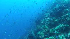 School of Reef Fish Stock Footage