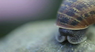 Snail Time lapse sequence Stock Footage