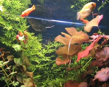 Fishes and plants Stock Footage