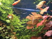 Stock Video Footage of Fishes and plants