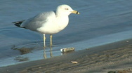 Stock Video Footage of seagull nice colors