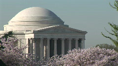 Cherry Blossoms Jefferson Memorial Stock Footage