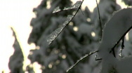 Ice covered branch HD Stock Footage