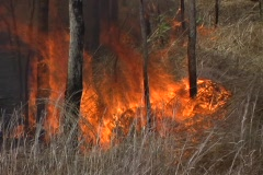 Grass Fire 1 Stock Footage