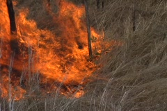 Grass Fire 2 Stock Footage