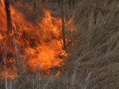 Stock Video Footage of Grass Fire 2